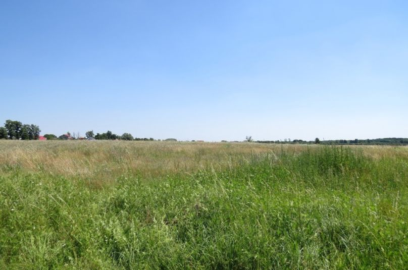 Działka sprzedaż Lubiszyn, Ściechów, 5139 m<sup>2</sup>